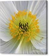 Lovely White Flower Square Canvas Print