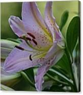 Loving Lilies Canvas Print
