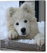 Loving The Snow Canvas Print