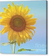 Loving The Sun Canvas Print