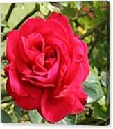 Lovely Red Rose Canvas Print