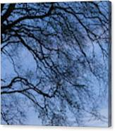 Low Angle View Of Tree At Dawn, Dark Canvas Print