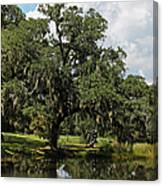 Low Country Beauty II Canvas Print