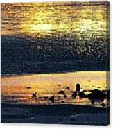 Low Tide Gold Canvas Print