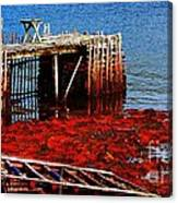 Low Tide - Red Seaweed - Fishing - Moratorium Canvas Print
