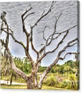 Lowcountry Marsh On Sea Island Canvas Print