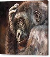 Lowland Gorilla Canvas Print