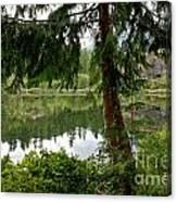 Lush Green At Starvation Lake Canvas Print