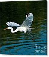 Lucky Egret Canvas Print