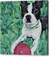 Lucy With Ball In Grass Canvas Print