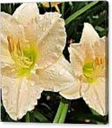 Lullaby Baby Daylilies Canvas Print