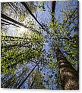 Lumberjack Heaven Canvas Print
