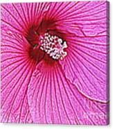 Luminescent In Pink Canvas Print