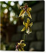 Luminous Chain Of Orchids Canvas Print