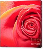 Luminous Red Rose 1 Canvas Print