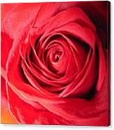 Luminous Red Rose 7 Canvas Print