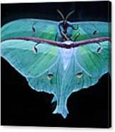 Luna Moth Mirrored Canvas Print