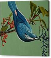 Lunch Time For Blue Bird Canvas Print