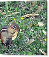 Lunch Time Photo A Canvas Print