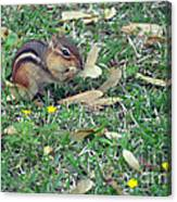 Lunch Time Photo E Canvas Print