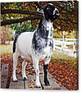 Lunch With Goat Canvas Print