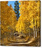 Lundy Canyon Canvas Print