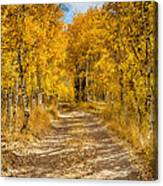 Lundy Canyon Pathway Canvas Print