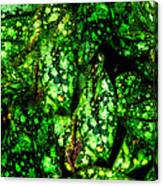 Lungwort Leaves Abstract Canvas Print