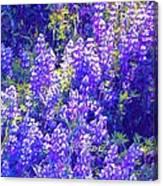 Lupine 2 Canvas Print
