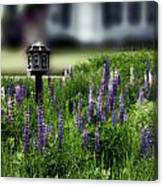 Lupine And Houses Canvas Print