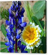 Lupine And Tidy Tip Canvas Print