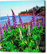 Lupine Bay Fortune Canvas Print