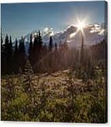 Lupine Field Sunstar Canvas Print