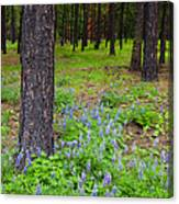 Lupine Forest Canvas Print