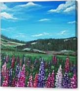 Lupine Hills Canvas Print