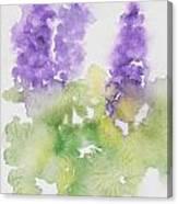 Lupine Canvas Print