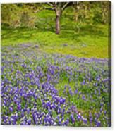 Lupine Oak Canvas Print