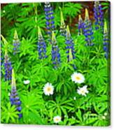 Lupines And Daisies 11 Canvas Print