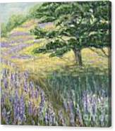 Lupines In May Canvas Print