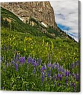 Lupines On The Hillside Canvas Print