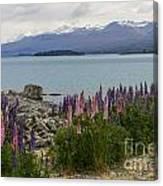 Lupins By Lake Tekapo Canvas Print