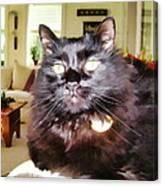 Lura Leigh Kitty Canvas Print