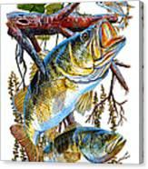 Lurking Bass Canvas Print