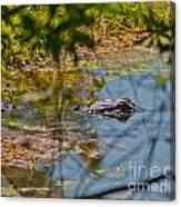 Lurking Gator Canvas Print