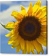 Lus Na Greine - Sunflower On Blue Sky Canvas Print