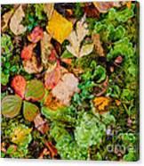 Luscious Lettuce Canvas Print