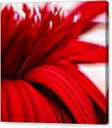 Luscious Red Flower Canvas Print