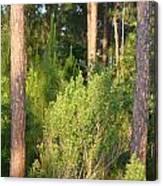 Lush Forest Canvas Print