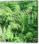 Lush Green Fern Canvas Print