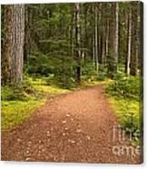 Lush Green Forest At Cheakamus Canvas Print